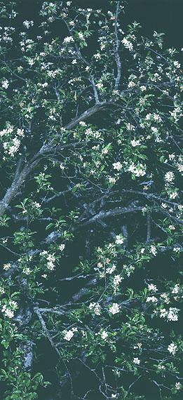 Uwe H. Seyl: o.T. Still Life, 216 x 96 cm