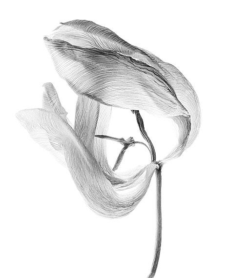 Walter Schelso.T. # 02, 2010Fiber based Fine Art Print50 × 40 cm