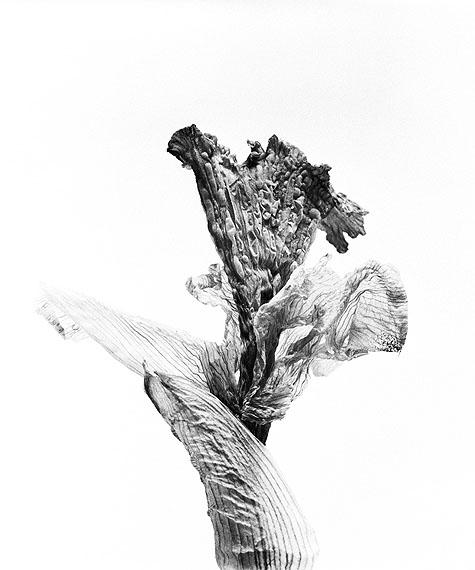 Walter Schelso.T. # 12, 2010Fiber based Fine Art Print50 × 40 cm