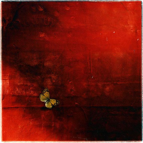Toni CatanyNatura morta 123, 1986Edition of 10,50 x 50 cm© Toni Catany
