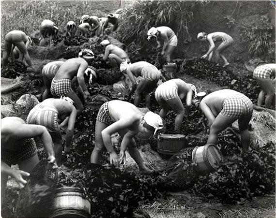 © Yoshiyuki Iwase: Seaweed Harvest, Japan 1956