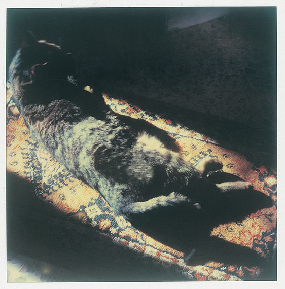 Andrey Tarkovsky: Grisha, The Cat. Lambda print. 2007. 50 x 40 cm. Edition 12