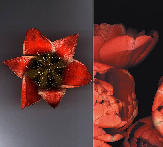 Luzia Simons Stockage 08, 2004 180 x 200 cm Diptych, 180 x 115 and 180 x 85 cm Scannogramm; Lightjet Print /Diasec Ed. 3