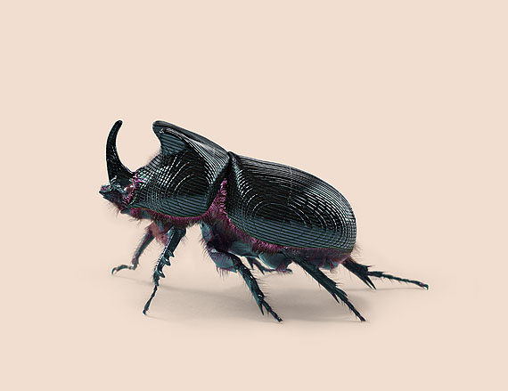 BEETLE [Oryctes transmissionis] Insect adapted to continuous tracking © Vincent Fournier