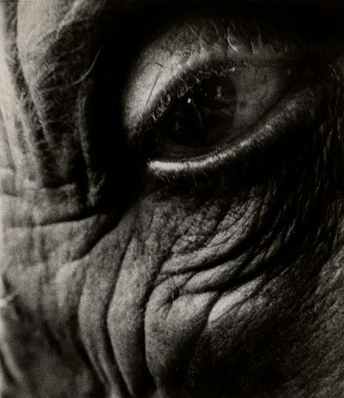 Jean Arp's Eye, 1960© Bill Brandt Archive Ltd.Courtesy Edwynn Houk Gallery