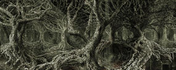Phloem © Angelo Musco
