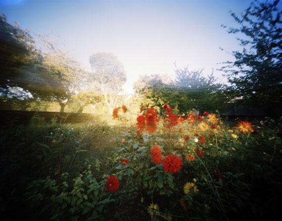 Hanns Zischler                 Blitzende Blüten                  2010,50 x 60 cm                 Digital Fine Art Print auf                 Hahnemühle Photo Rag                 © Hanns Zischler