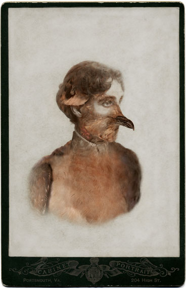 Sara Angelucci, Aviary (Female Passenger Pigeon/extinct), 2013