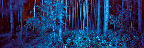 André Wagner: blue forest (2010), 60 x 180 cm, from the series sound rooms © André Wagner