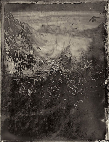 """Simple Song #51: Flower on Riverside"" (2012) Pigment print on fiber paper from collodion wet plate. 30x 21cm - Ed. of 20; 147.3 x 111.8cm - Ed. of 8.