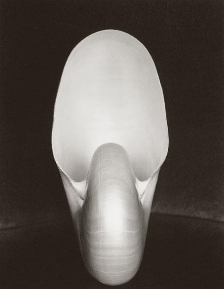 Edward WestonNautilus Shell, 1927Gelatin silver print9.4 x 7.25 in.23.9 x 18.4 cm.US$6,000-8,000