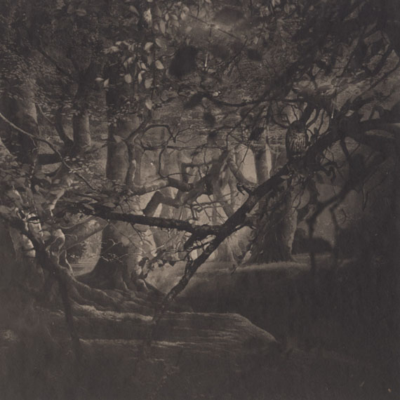 Urban Forests, Central Park #22, New York #22, 2011