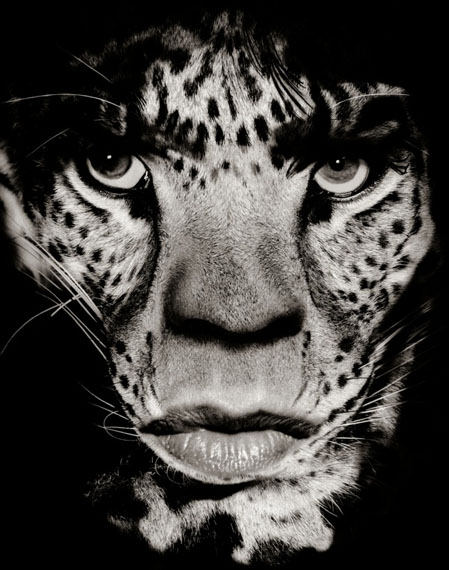 Mick Jagger/Leopard, 1992/2011Archival pigment print234 x 218 cm (95 5/8 x 85 7/8 in.)Edition of 5
