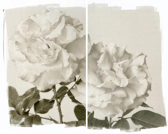 Brigitte CarnochanTWO ROSES, 2011Platinum Palladium Print