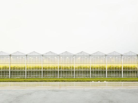 Henrik Spohler: Gewächshaus mit Tomatenpflanzen, 2011, 70 x 90 cm, Pigmentprint © Henrik Spohler