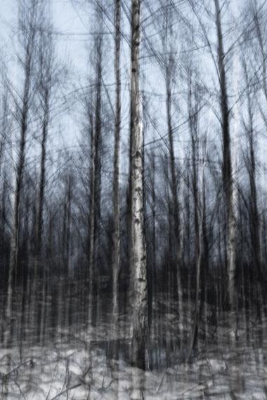 Winter birch, 2009