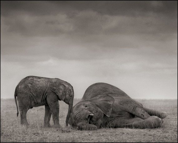 The Two Elephants · Amboseli · 2012 © Nick Brandt
