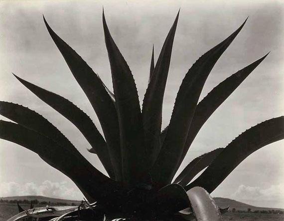 Maguey, Mexico, 1926