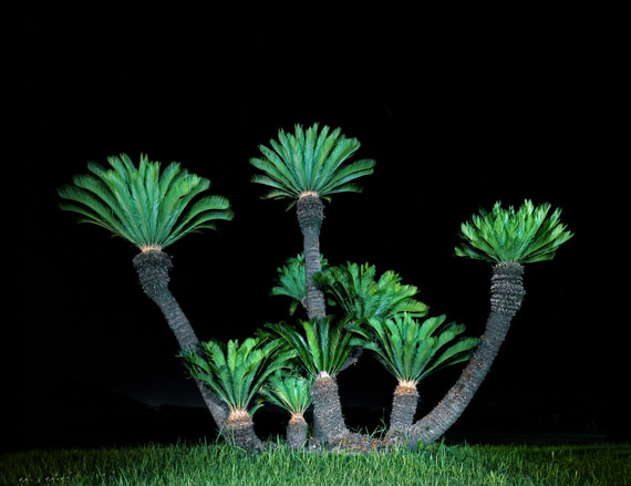 Juliane Eirich: Palm Trees, Itoshima 2011