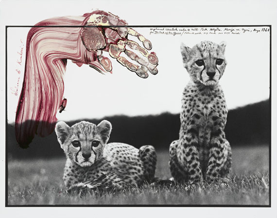 """Peter Beard""""ORPHANED CHEETAH CUBS @ NATL. PARK HDQUTRS. MWEIGA NR. NYERI, KENYA"""".1968Gelatin silver print, 1998. 151/2x227/8in. (187/8x237/8in.). In the image upper right signed, dated, titled and annotated: """"for the End of the Game"""" as well as Beards address in Nairobi, Kenya in black ink. In the image upper left annotated: """"Salaams & Kwaheri!"""" in magenta coloured ink as well as hand-print of Peter Beard."""