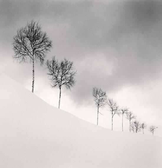 Michael KennaNine Silver Birches, Shibetsu, Hokkaido, Japan 2009Edition von 45Silver Gelatin Print20 x 20 cm© Michael Kenna / Courtesy of Bernheimer Fine Art Photography
