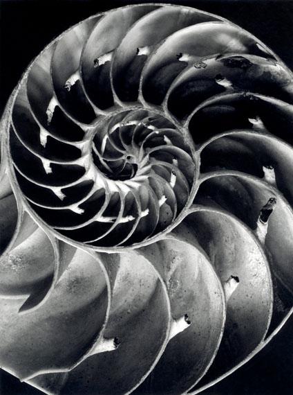 """""""Querschnitt durch ein Nautilus Gehäuse 1940/41"""" © bpk / Alfred Ehrhardt Stiftung"""