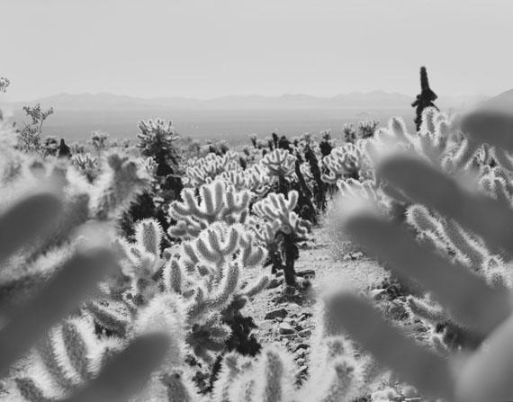 Arno Rafael Minkkinen. Cholla, Joshua Tree, 2010 © Arno Rafael Minkkinen
