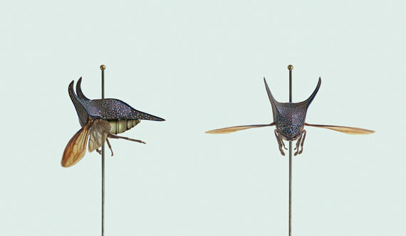 TREEHOPPER [Hemikyptha botulI] Pollutant-sensitive insect. © VINCENT FOURNIER