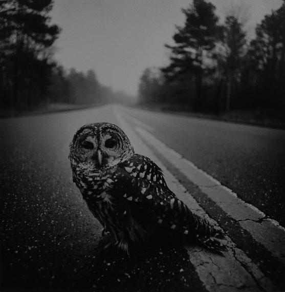 Arthur Tress, Owl on Road, Big Thicket, Texas, 1975Gelatin silver print, 50 x 60 cm, edition of 50© Arthur Tress, Courtesy Galerie Esther Woerdehoff