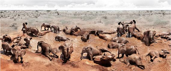 Joachim Schmeisser: Circle of Life, Kenya 2010, 250 x 117 cm
