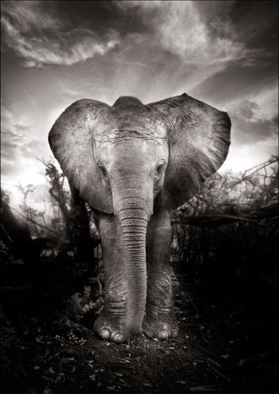 Joachim Schmeisser: Kibo, Kenya 2009, 150 x 200 cm