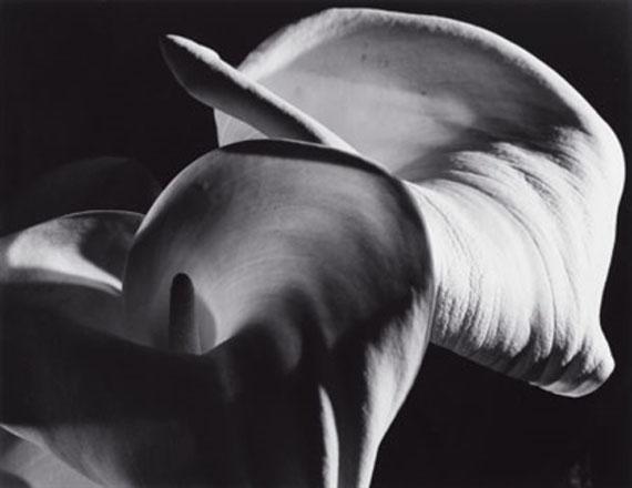 Horst P. HorstCalla Aethiopica, 1945Gelatin silver print 13.75 х 17.75 in. Est. US$9,000–11,000