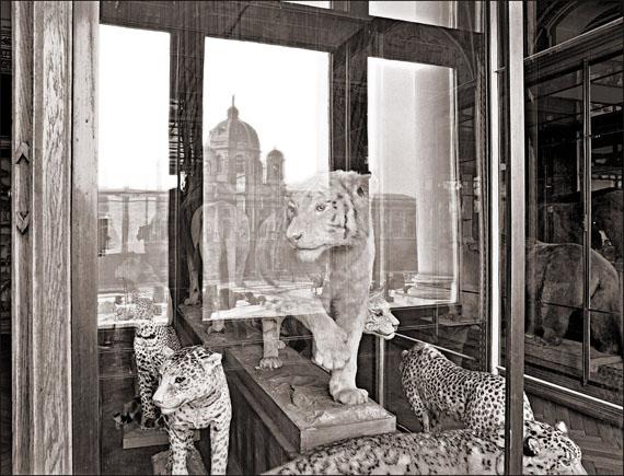 Matthias Holländer: Naturhistorisches Museum Wien 12, Tiger, Fine Arte Print, 1991/2007