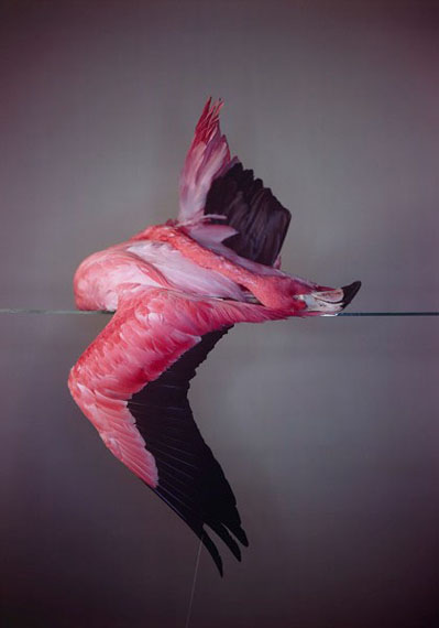 Large Flamingo, 2014