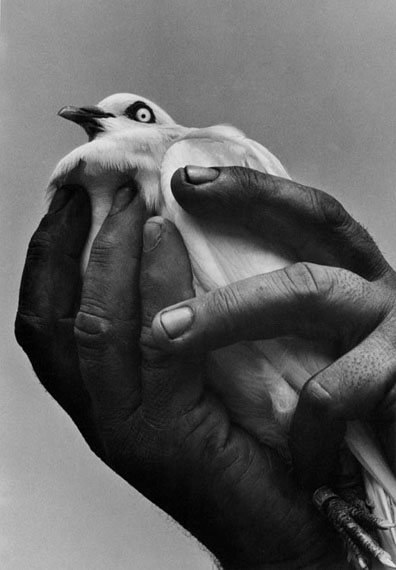 Harold Feinstein: Bird in Hand, NYC, 1955