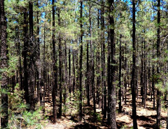 Wald, Norden Teneriffa