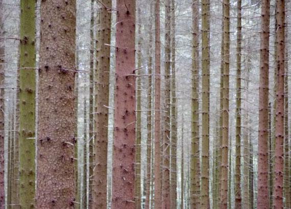 Wald, Winterberg