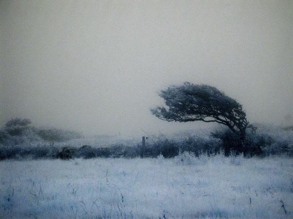 "© Ulrike Crespo: ""Wind blown"", Golden, West Cork, Ireland"