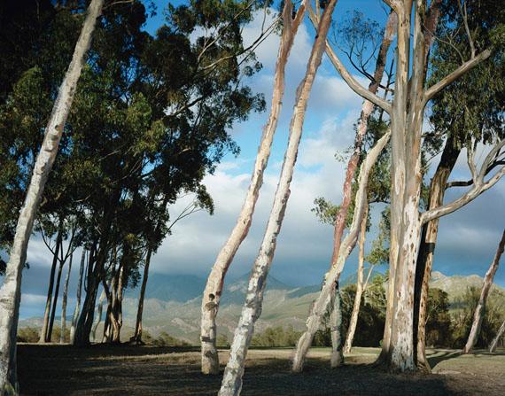 Tessa Verder: Day 12, Fotografie, 120 x 153 cm, 2010