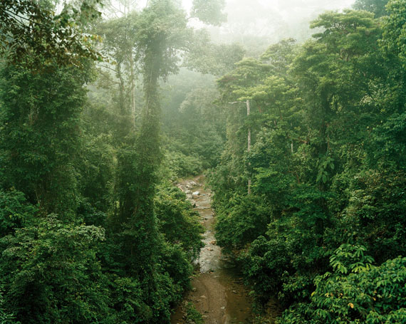 Olaf Otto Becker: Primary forest 11, Malaysia, 10/2012