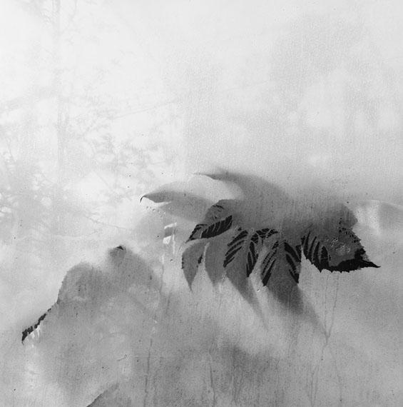 © Miquel Frontera Serra