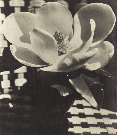 Lot No. 13