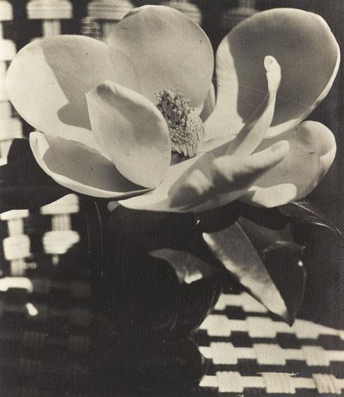 Lot No. 13Man Ray, Magnolia, 1926Silver print Estimate: €30,000-40,000
