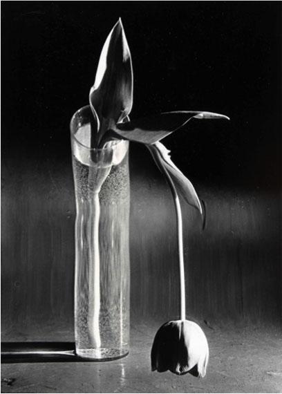 André KertészMelancholic Tulip© André Kertész / Courtesy of Bernheimer Fine Art