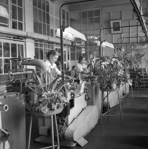 Shaikhet A. Greening up Kalibr factory.  Moscow, 1955