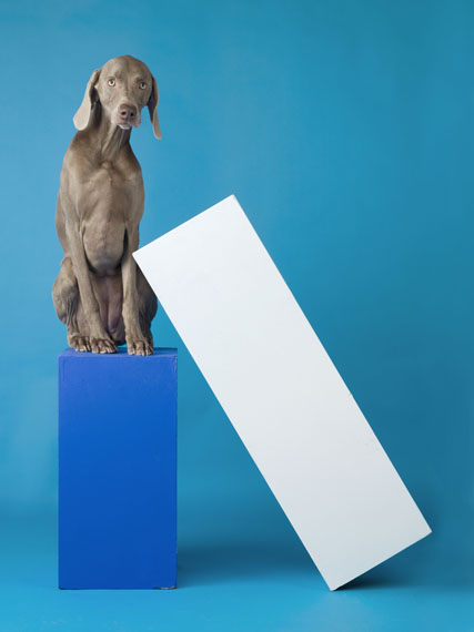 William Wegman, Lean To, 2014, pigment print, 43 1/2 x 33 1/2 inches, 110.5 x 85.1 cm, edition of 7