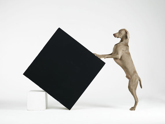 William Wegman, Constructivism, 2014, pigment print, 39 1/4 x 52 3/4 inches, 99.7 x 134 cm, edition of 4
