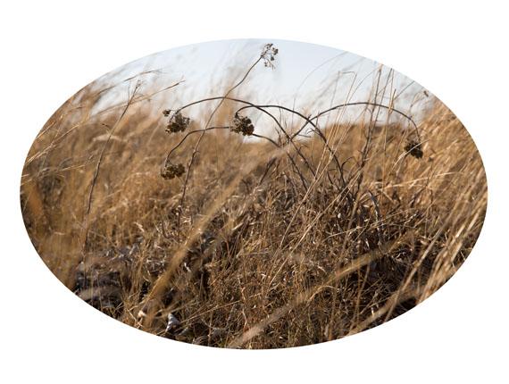 """Beatrix Reinhardt: untitled aus der Serie """"Battlefields of KwaZulu-Natal"""", 2013archival inkjet print,  46 x 63 cm, Auflage 3"""