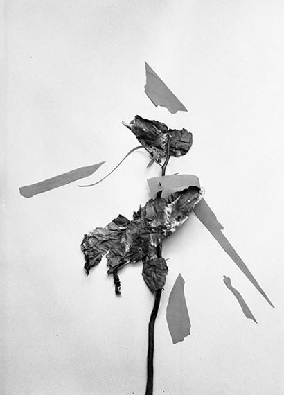 Leaves of Grass No. 17 (2014)
