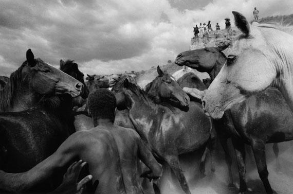 Ulrich Mack: Wildpferde in Kenia, 1964© Ulrich Mack, Hamburg / Leica Camera AG